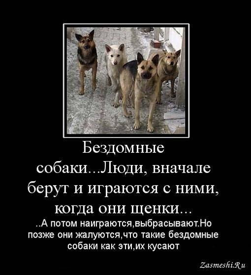 8 научно обоснованных причин завести собаку