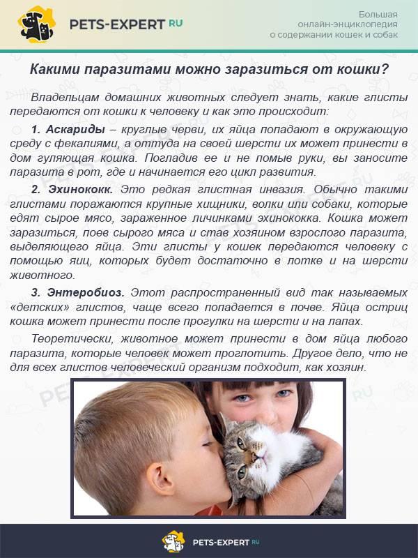 Можно ли заразиться глистами от собаки детям и взрослым людям? какие из гельминтов передаются человеку от щенка, что делать для профилактики и как лечить ребёнка?