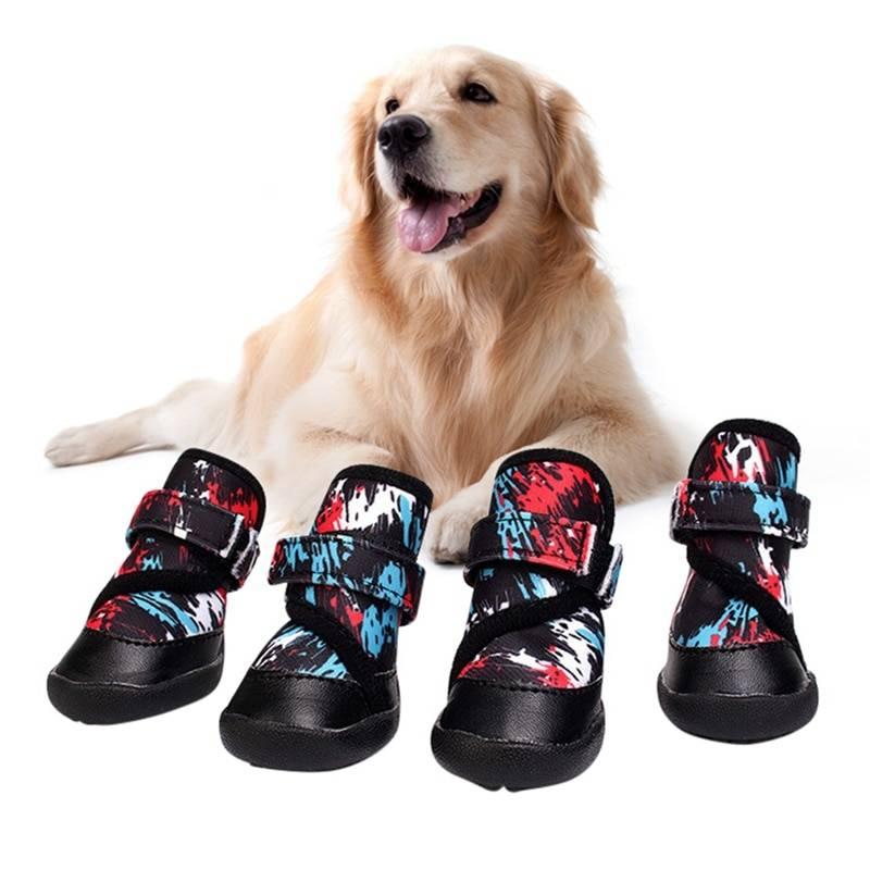 Как правильно выбрать зимнюю обувь для собак?