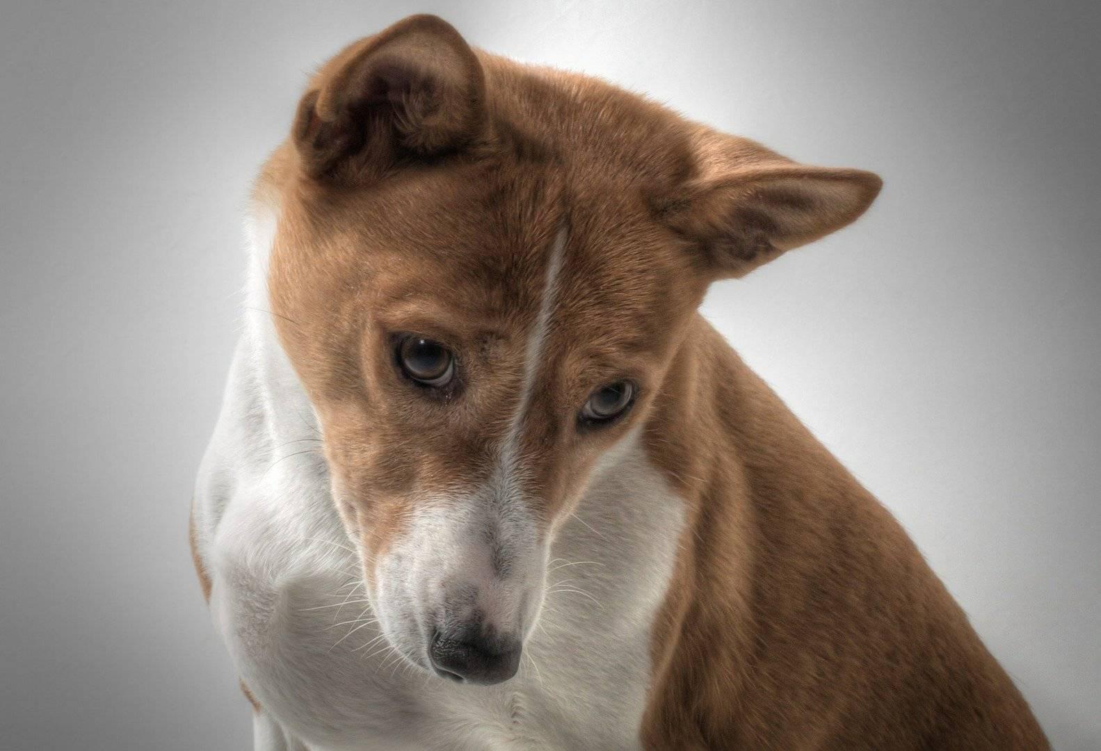 5 пород собак для квартиры - вэб-шпаргалка для интернет предпринимателей!