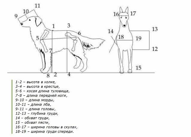 Где находится холка у собак | thebiologia.ru