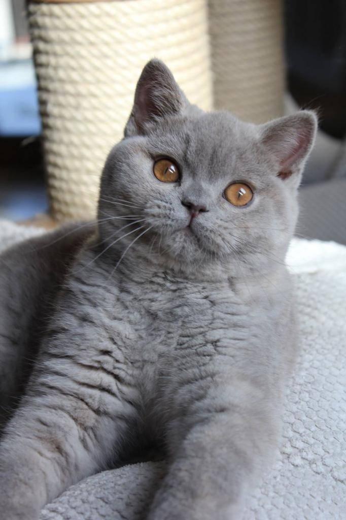 Имена для котов мальчиков: звучные, красивые, прикольные, русские клички, имена для котов-британцев