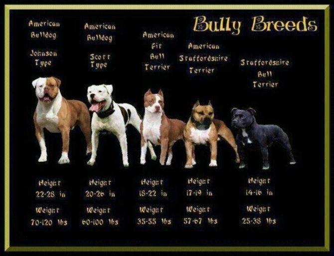 Красивые клички для собак мальчиков, легкие и мелодичные имена для щенков.