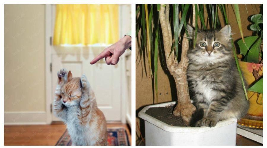 Почему у кошки неприятный запах изо рта: причины и лечение