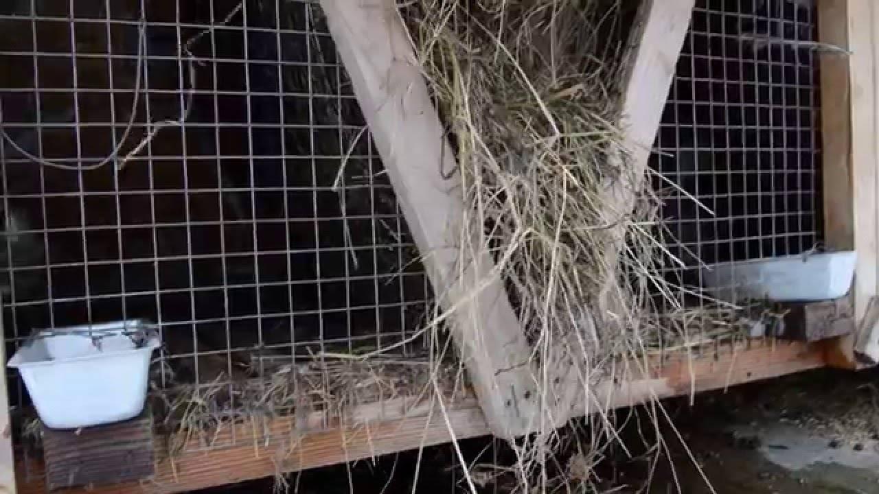 Содержание и уход за декоративным кроликом дома в условиях клетки и без нее, для начинающих и опытных кролиководов