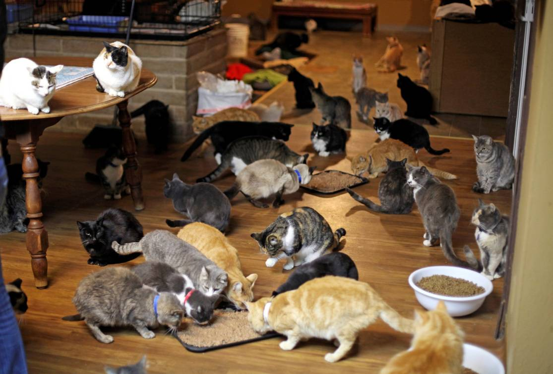 Какое домашнее животное завести? кого можно держать дома? кто лучше: кошки или собаки? каких питомцев заводят аллергики и другие люди?