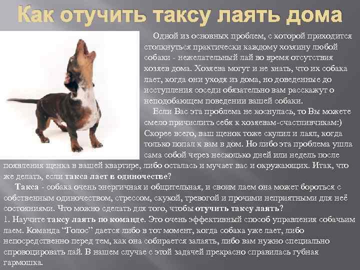 Собака ходит кругами