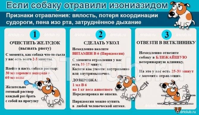 Собака съела крысиный яд: признаки и экстренная помощь