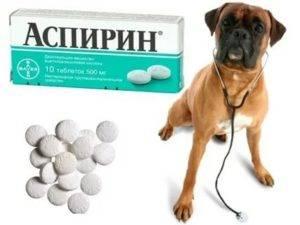 У кота болят зубы чем обезболить mylucklife.ru