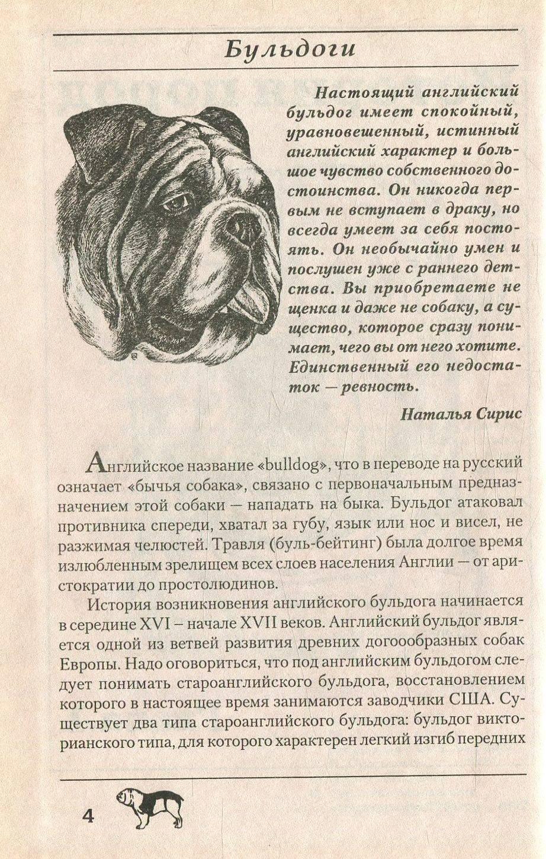 Староанглийский бульдог (заново созданный) — фото и описание породы собак