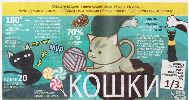 Всемирный день кошек — ну просто «мау» праздник!