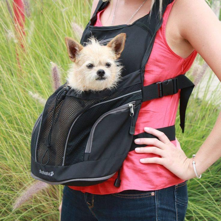 Рюкзак для собаки, разновидности изделий, сумки для разных пород