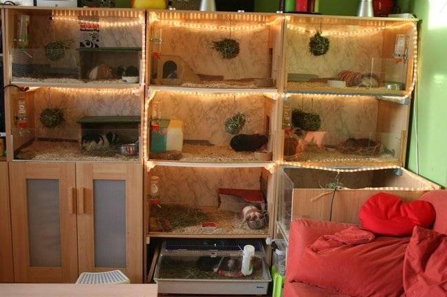 ᐉ как сделать домик для морской свинки своими руками в домашних условиях - чертежи и фото - zoopalitra-spb.ru