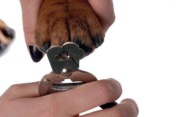 Как правильно подстричь когти собаке — инструменты и техника безопасности ⋆ собакапедия
