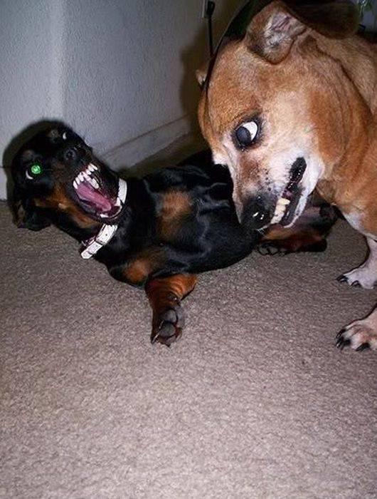 7 самых смешных и необычных пород собак в мире: прикольные и странные собаки, характеристика и стоимость щенков