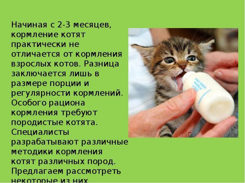 Правильное питание для кошек и котов в домашних условиях