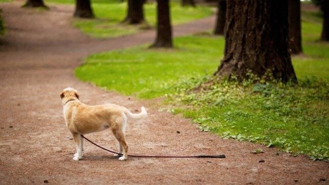 Что делать, если собака пропала: как и где искать пропавшую собаку, методы поиска, вероятность успеха, как предупредить побег