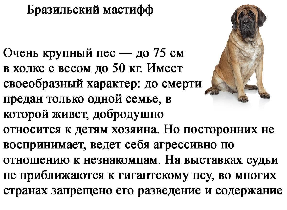 Список самых послушных пород собак