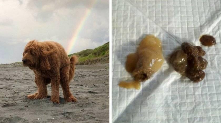 Почему собака не ест и поносит, что с этим делать?