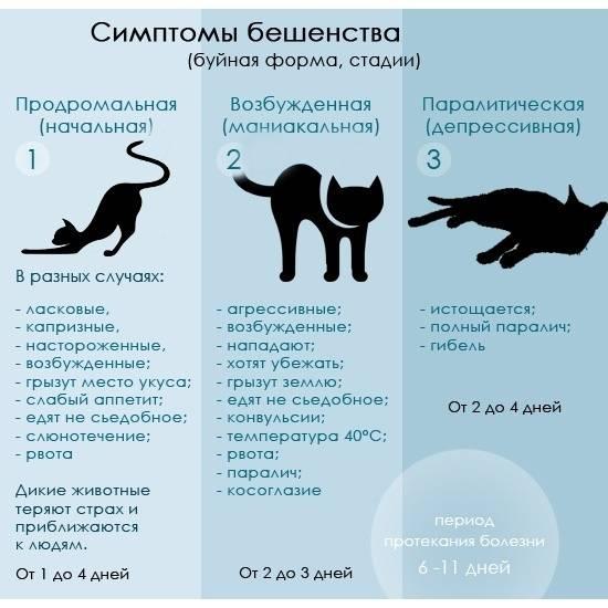Симптомы и первые признаки бешенства у кошек