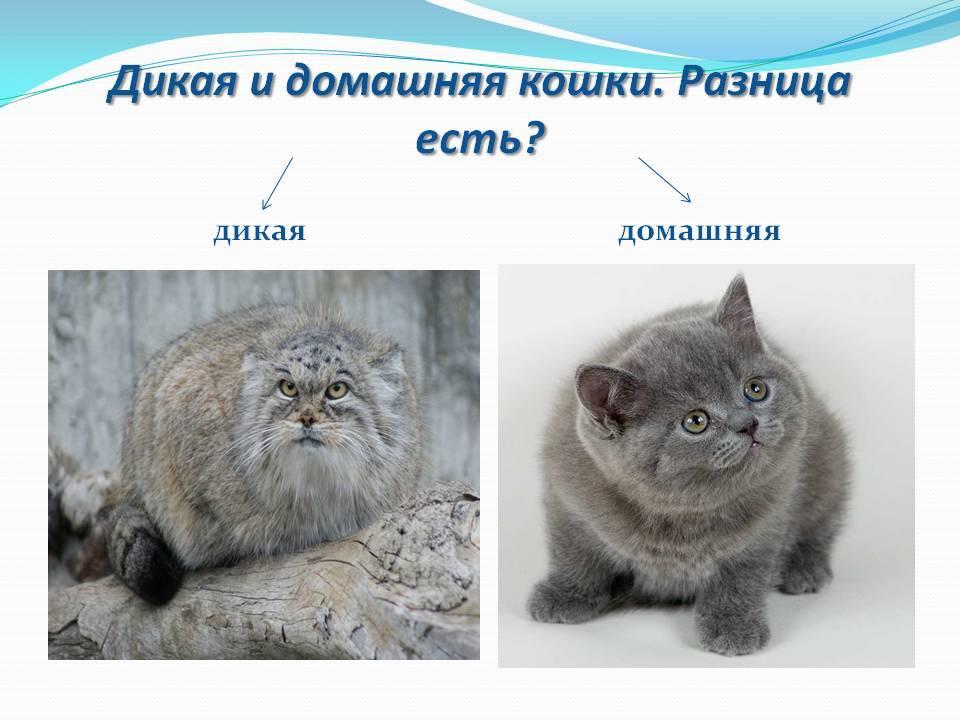 Как выбрать кошку для частного дома
