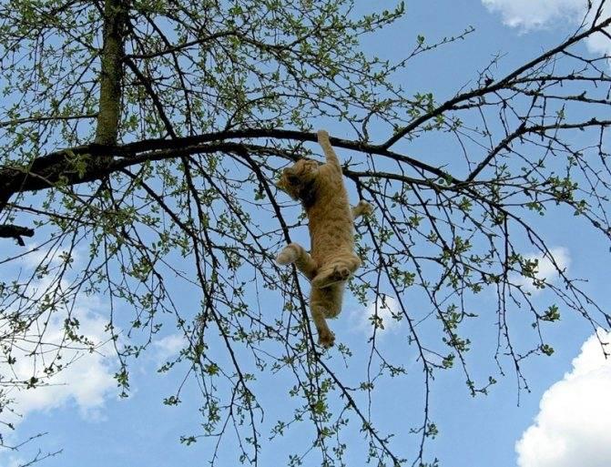 Как снять кошку с высокого дерева?