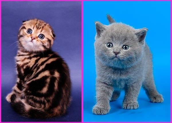 Окрасы кошек.