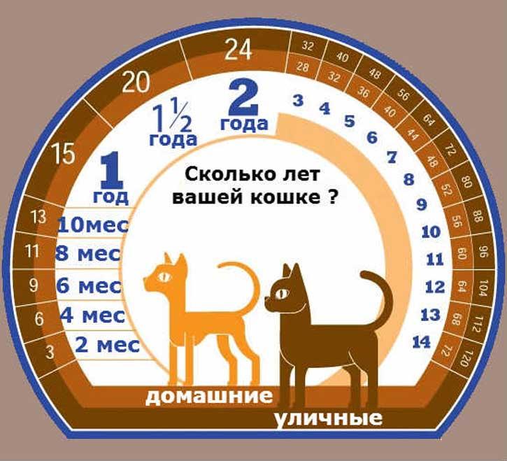 Возраст кошки: определение и формулы вычисления кошачьего возраста, возраст кошки по человеческим меркам в таблицах