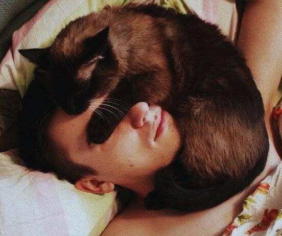 Сколько спят кошки в сутки и где они обычно ложатся?