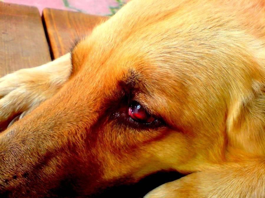 Как отучить собаку валяться в экскрементах и тухлятине и почему она так делает