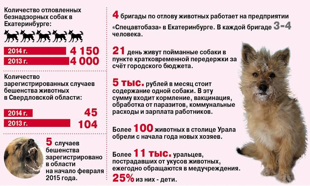 Друг или враг: как в регионах решают проблему бродячих собак