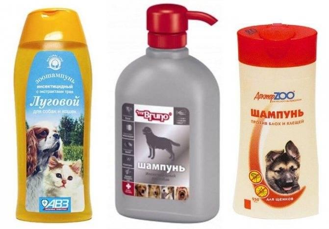 Можно ли купать собаку обычным человеческим шампунем