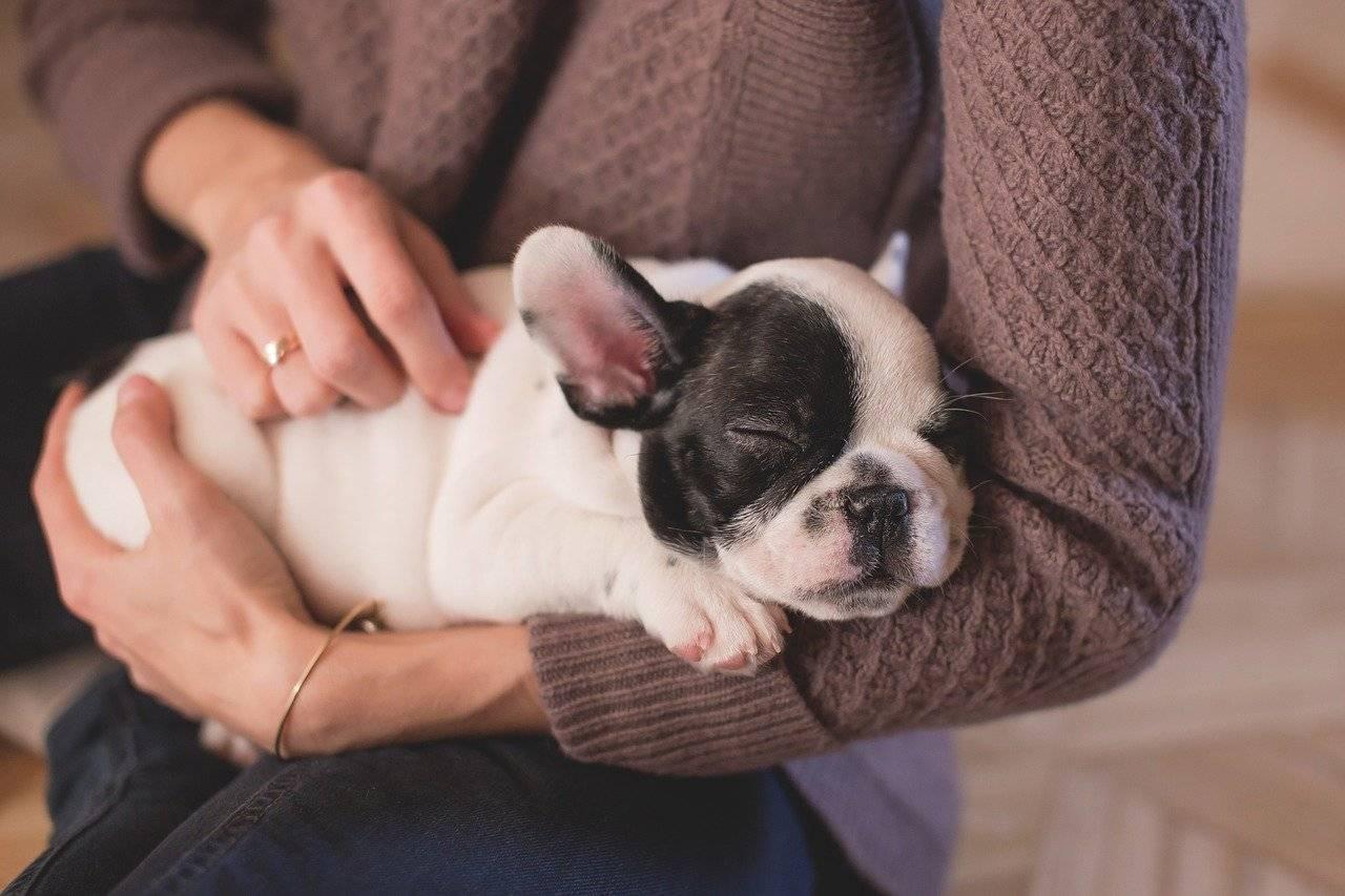 Королевские клички и имена для собак мальчиков и девочек.