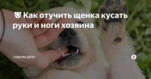 Почему собака лижется?