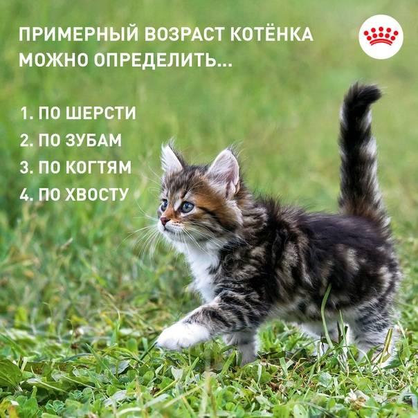 """Как определить возраст котёнка без помощи специалистов? — журнал """"рутвет"""""""
