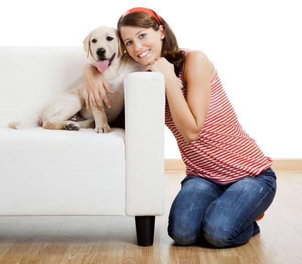 Породы собак для квартиры и ребенка с хорошим характером