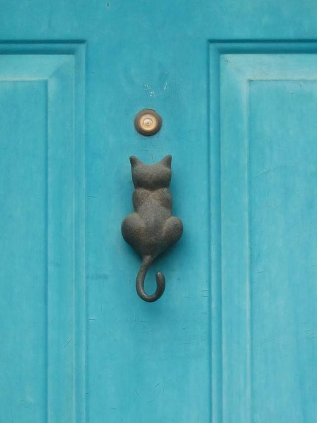 Почему кошка просит открыть дверь, но не заходит: объяснения и причины