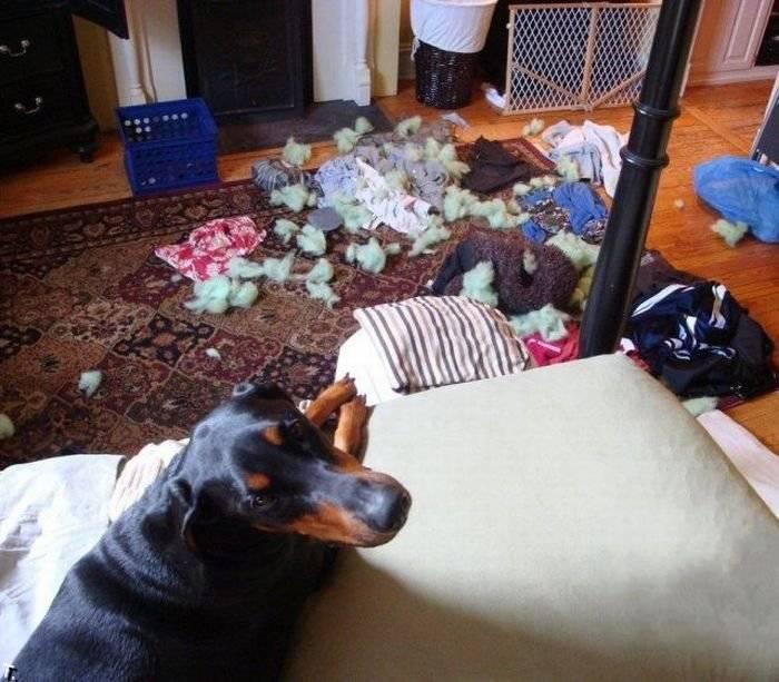 Чем занимаются собаки, когда хозяев нет дома: описание, фото, видео — женские советы