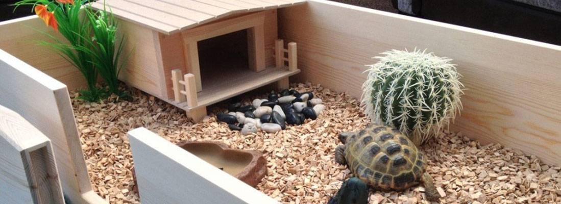 Как своими руками сделать террариум для сухопутной черепахи