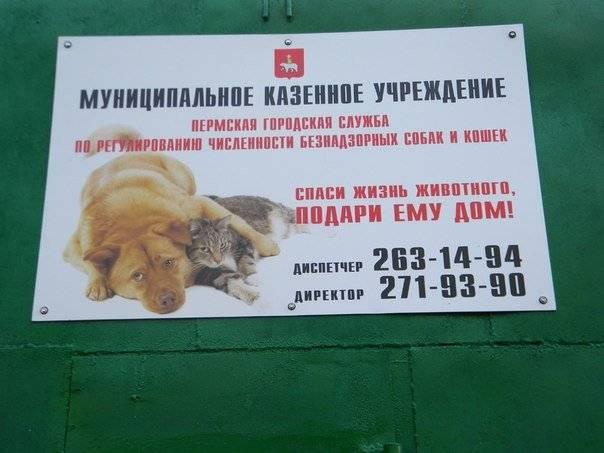 Бродячие собаки: куда обращаться в москве?