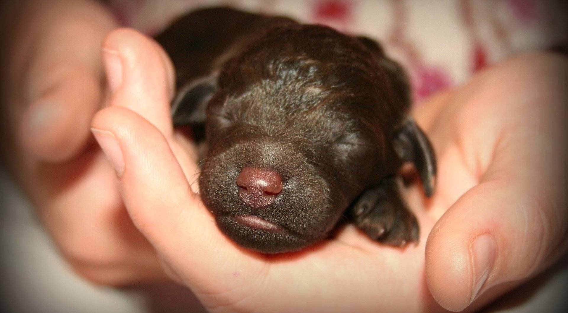 ᐉ когда щенки начинают хорошо видеть? - zoomanji.ru