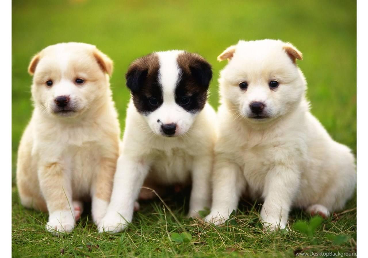 Популярные и оригинальные имена для хаски – какую кличку дать собаке