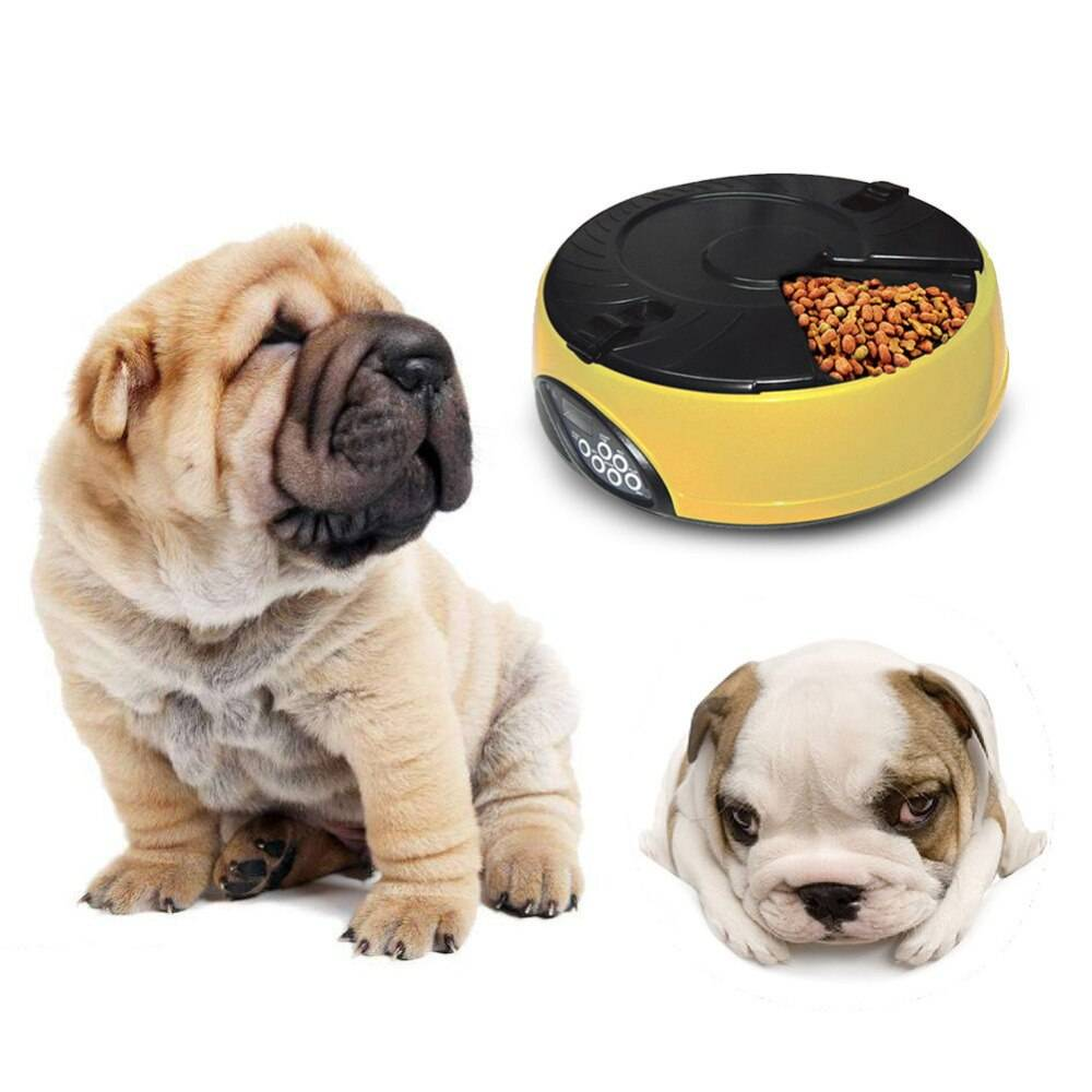 Автоматические кормушки для кошек и собак