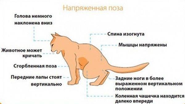 Почему кошка дышит с открытым ртом, причины и решения проблемы, видео