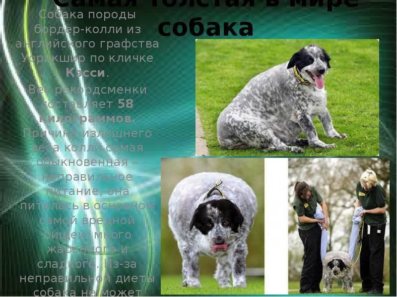 Рейтинг самых спокойных пород собак: лучшие псы с тихим характером