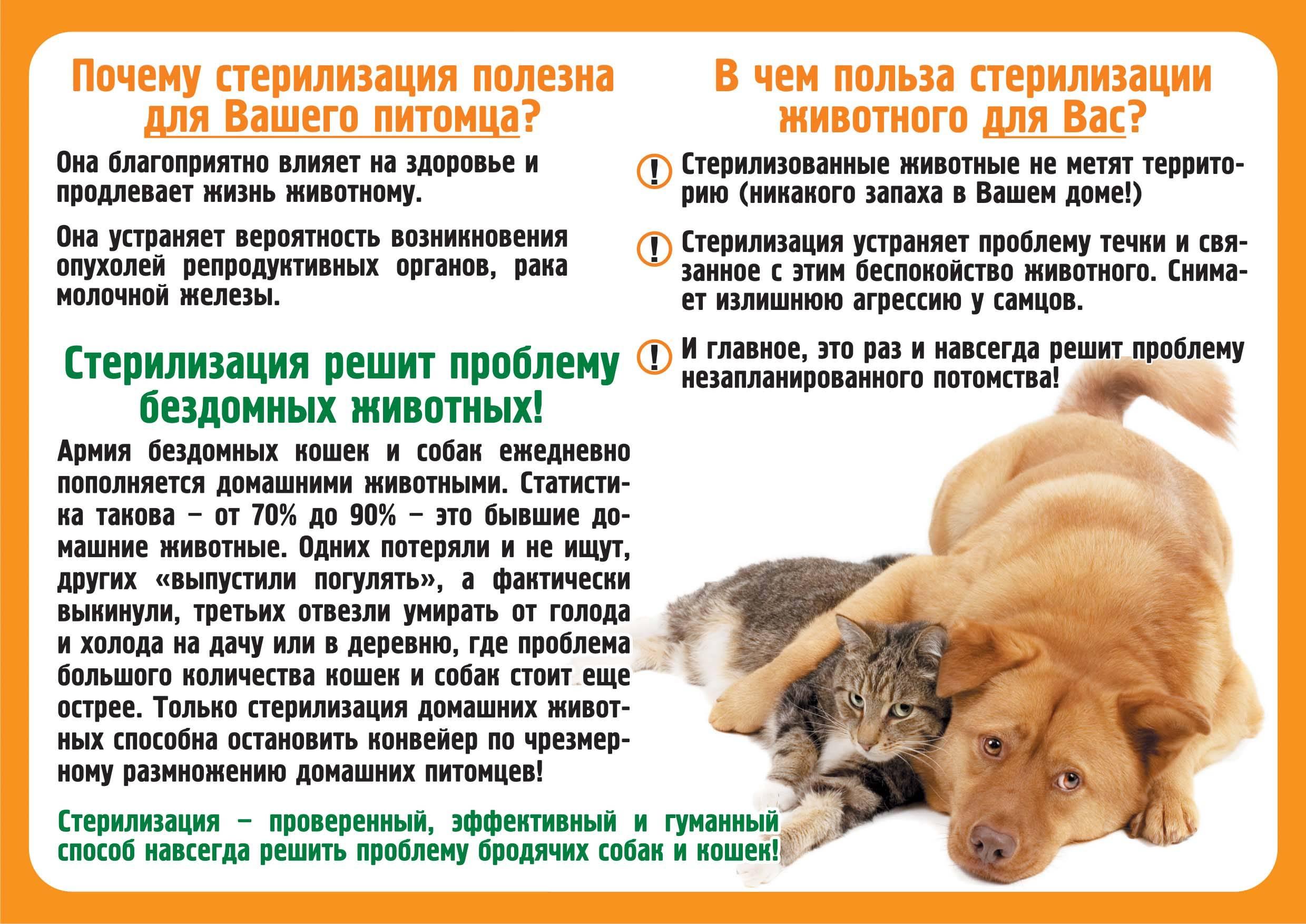 Собака плохо ест и вялая. что делать, если собака ничего не ест и постоянно вялая