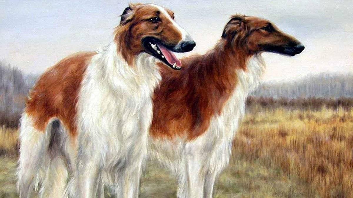 Борзые собаки: список современных пород