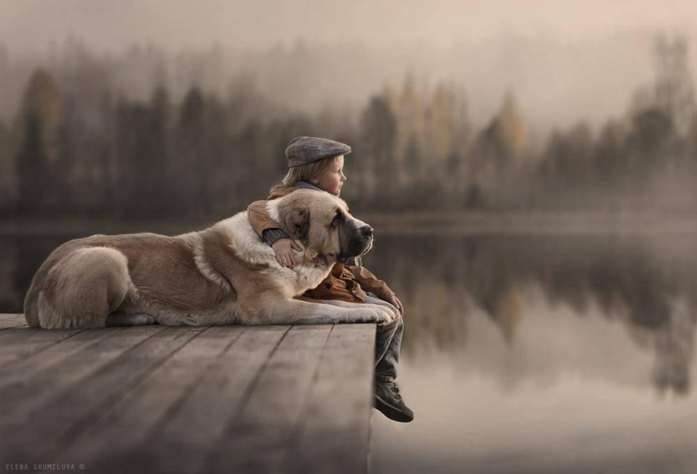 Лучшие и преданные друзья: список самых верных собак