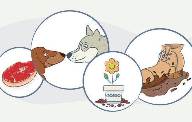 Круглые глисты у собак: виды, признаки и пути заражения, лечение