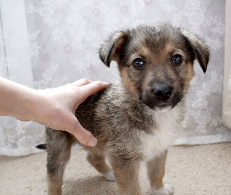 Клички для собак девочек: смешные, необычные, красивые и со смыслом для маленьких пород